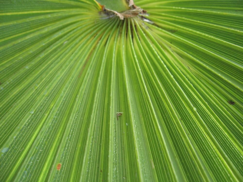 Florida Palm by choochy6