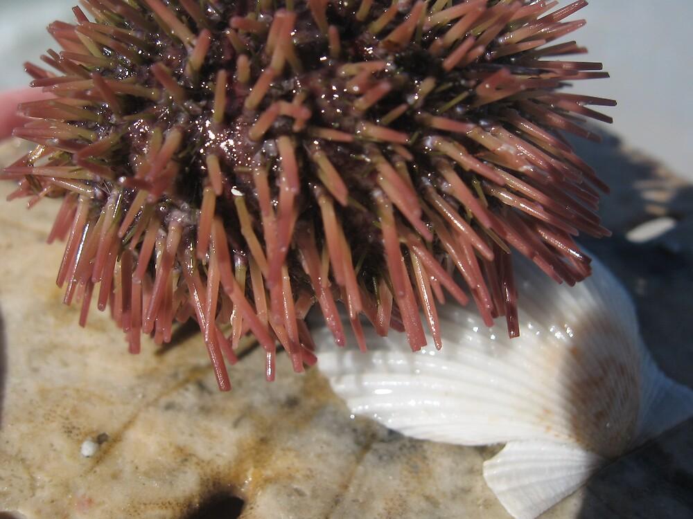 Sea Creature by choochy6