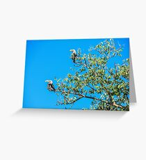 The southern red-billed hornbill (Tockus rufirostris) Greeting Card