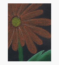 Orange Daisy Photographic Print