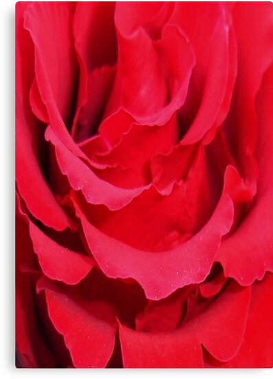 Beautiful Close Up Of Red Rose Petals by taiche