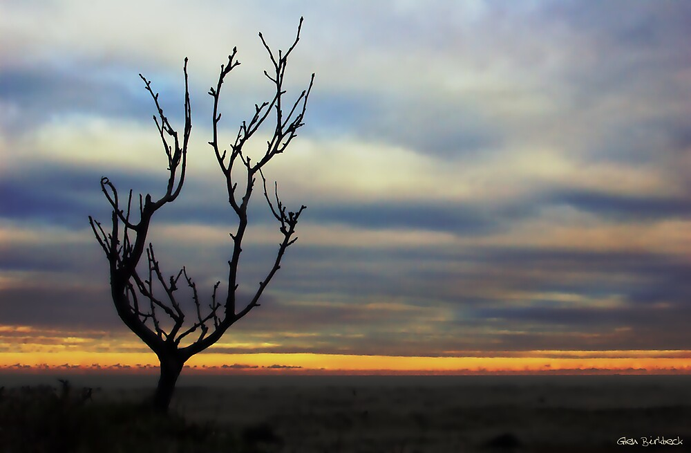 Barren Shapes by Glen Birkbeck