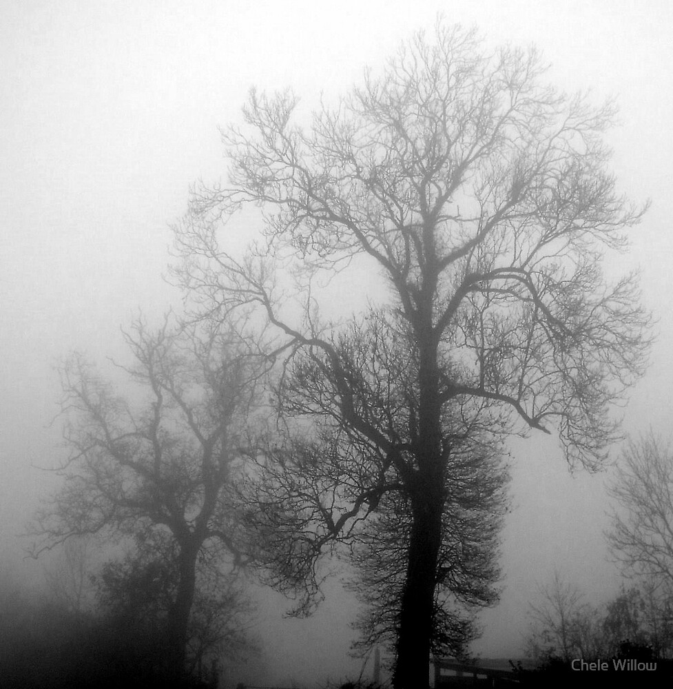 Tree Fog by Chele Willow