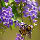 Save The Bumble Bee by K D Graves Photography