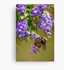 Save The Bumble Bee Canvas Print