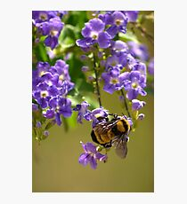 Save The Bumble Bee Photographic Print