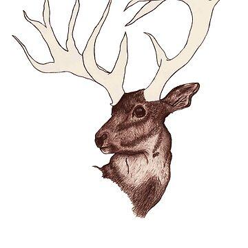 Deer by Rogann