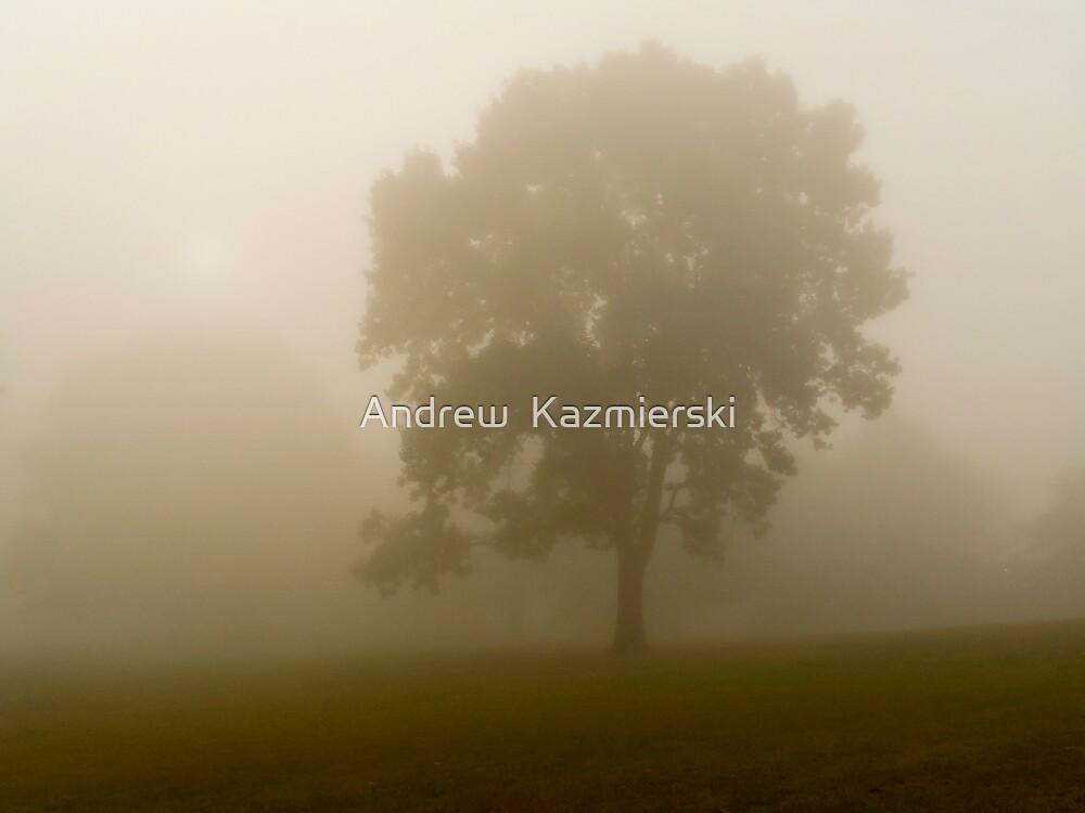 Dense Fog by andykazie