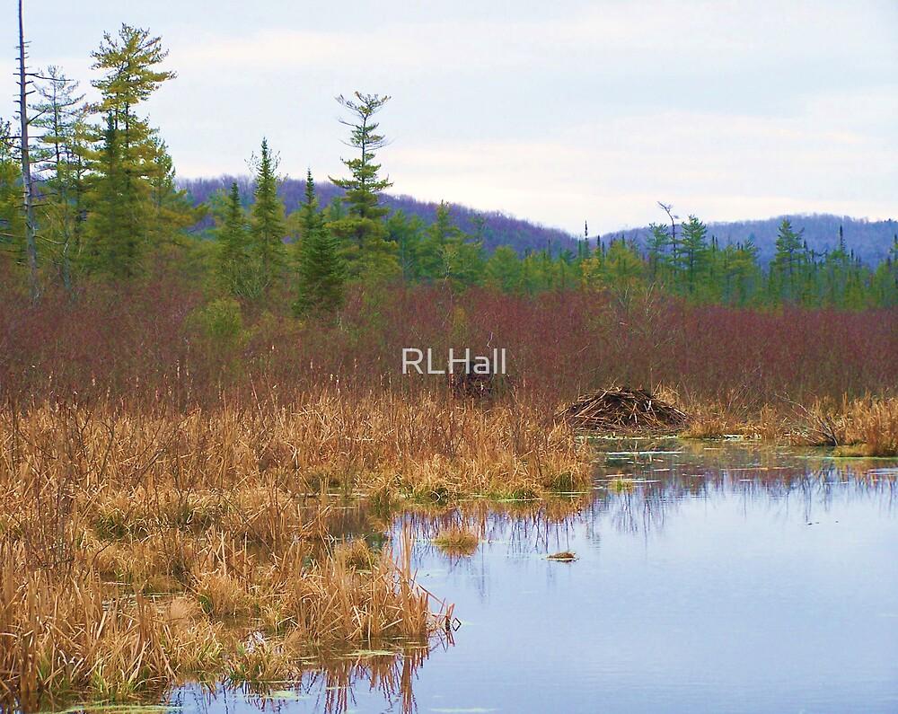 Beaver Swamp by RLHall