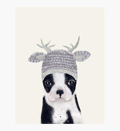 little boston ooh deer Photographic Print