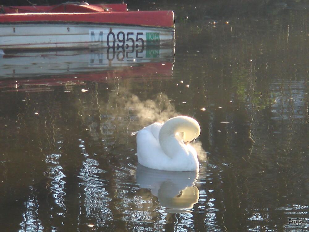Smoking Swan by Prys