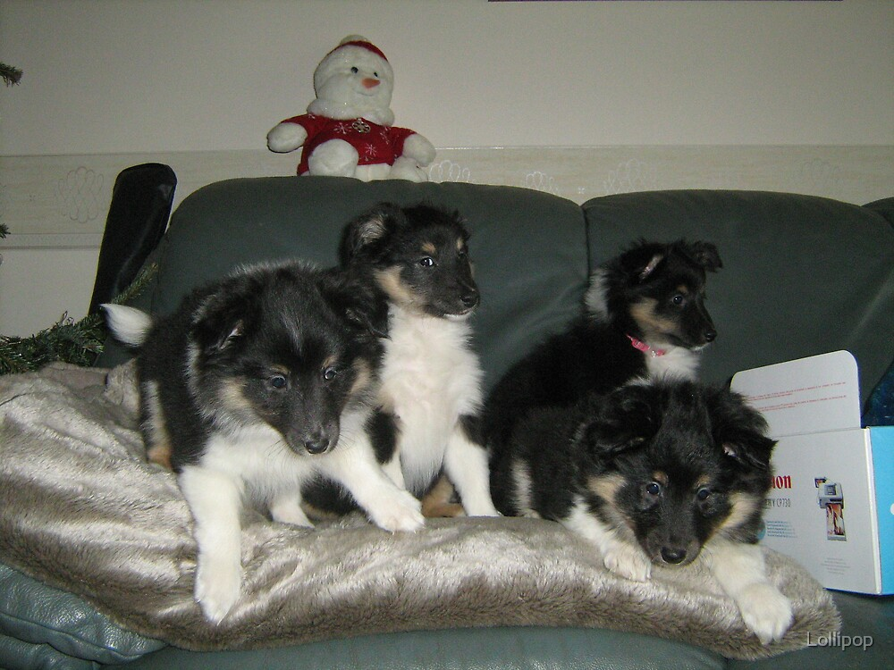 All 4 Puppies on the Sofa by Lollipop