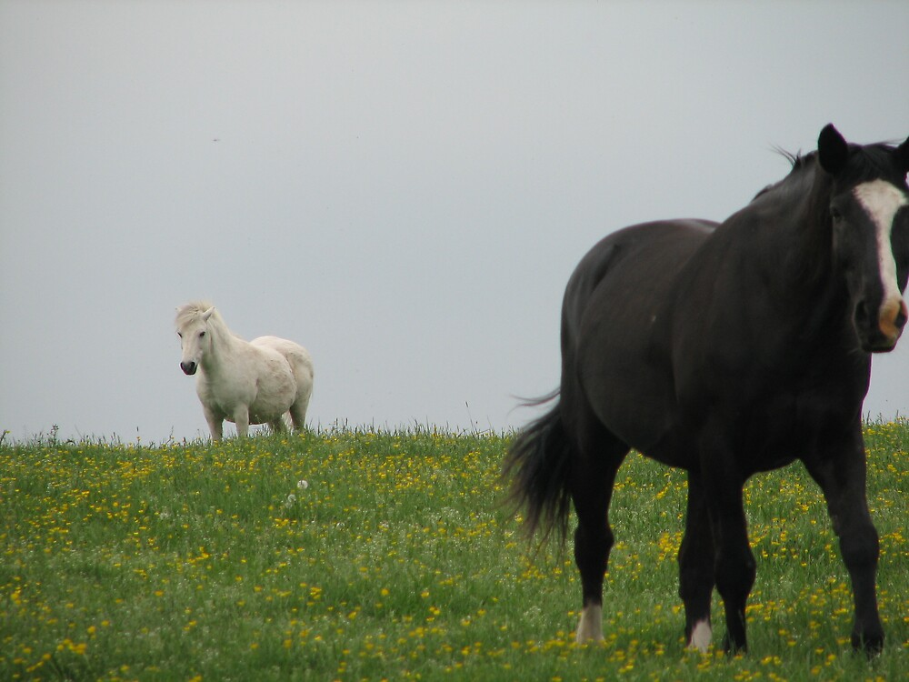 Horses by Lauren Carr