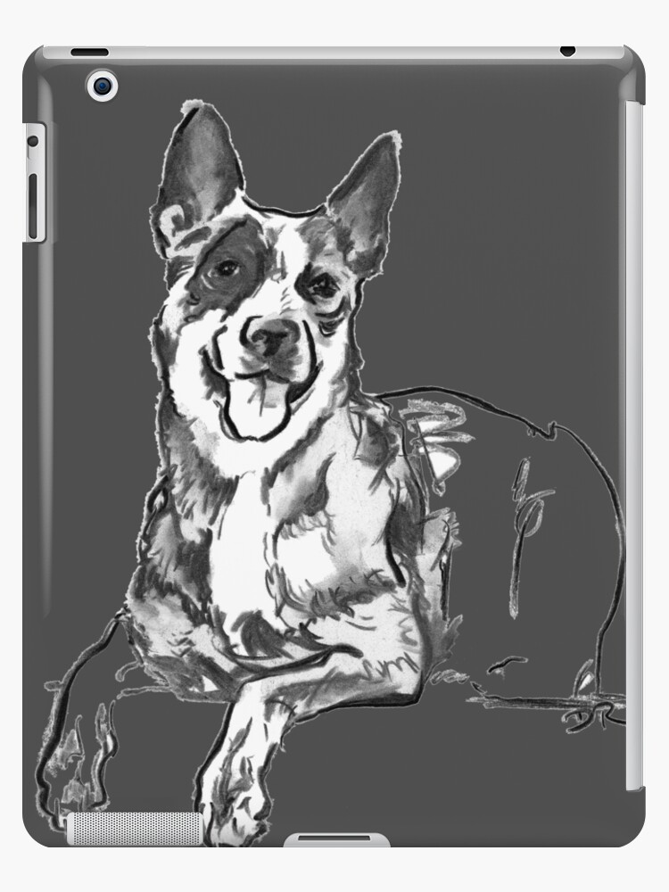 Blue Heeler Drawing by Douglas Rickard
