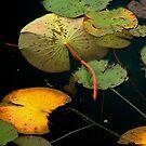 Water Lilies Vertical by Wayne King