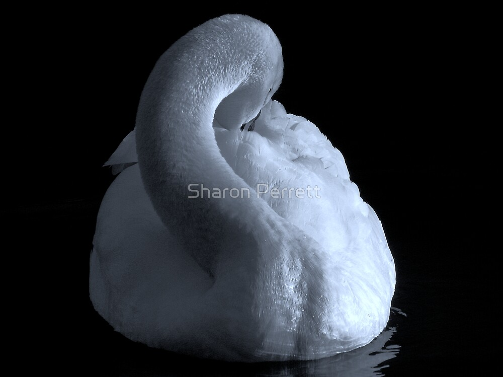 The Swan (In b&w) by Sharon Perrett