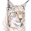 Lynx Colored Pencil Drawing by skidgelstudios