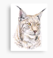 Lynx Colored Pencil Drawing Canvas Print
