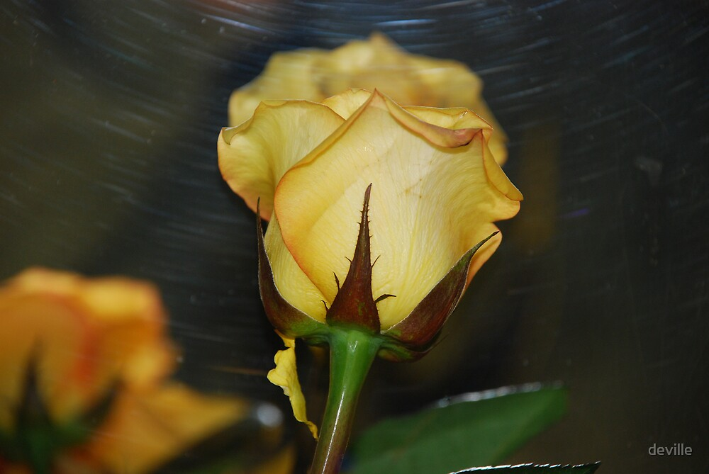 im just a rose by deville