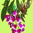 Thai Orchids by DAdeSimone