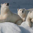 Bears On Ice by Steve Bulford