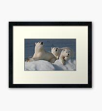 Bears On Ice Framed Print