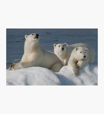 Bears On Ice Photographic Print