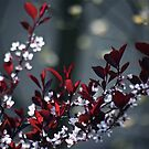 Japanese Plum Tree by autumnwind