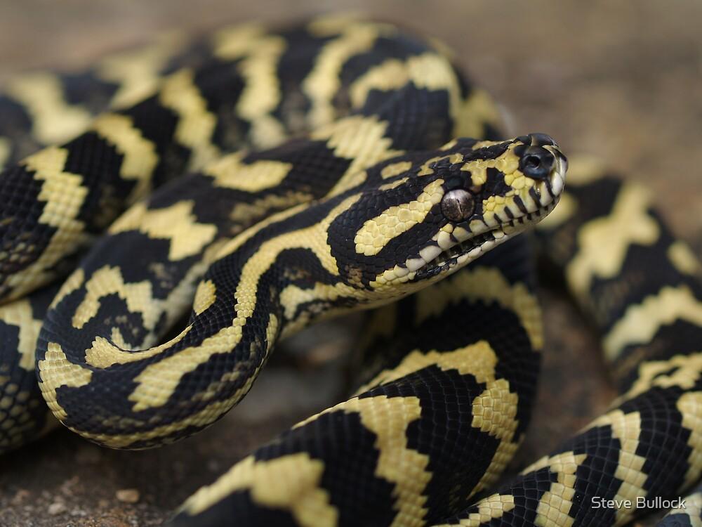 Jungle Carpet Python by Steve Bullock