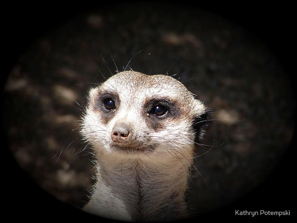 Meerkat Pose by Kathryn Potempski