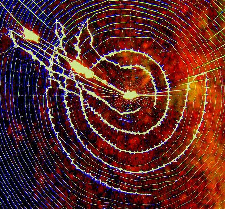 Galaxy Web by Katewah