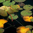 Water Lillies by Wayne King