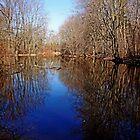 Tranquil Pond by Debbie Oppermann