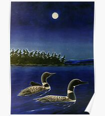 A Family Of Loons Poster