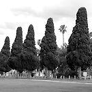 Springthorpe, Melbourne by lewildbeast