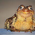 a personable toad by Laurie Minor