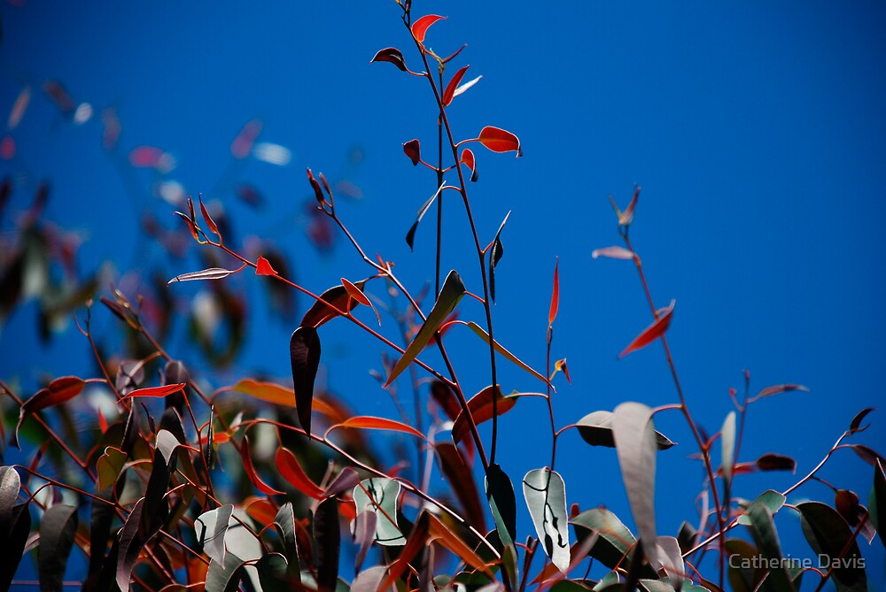 Blue and Red by Catherine Davis