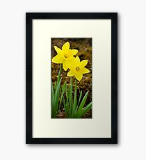 Tall Daffodil Flowers Framed Print