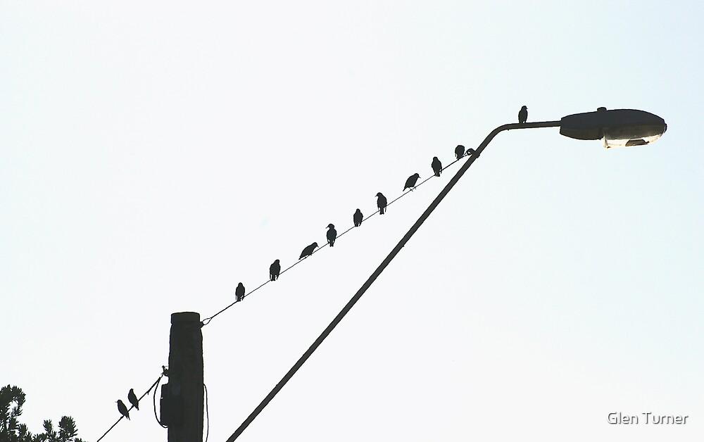 Birds on a wire by Glen Turner