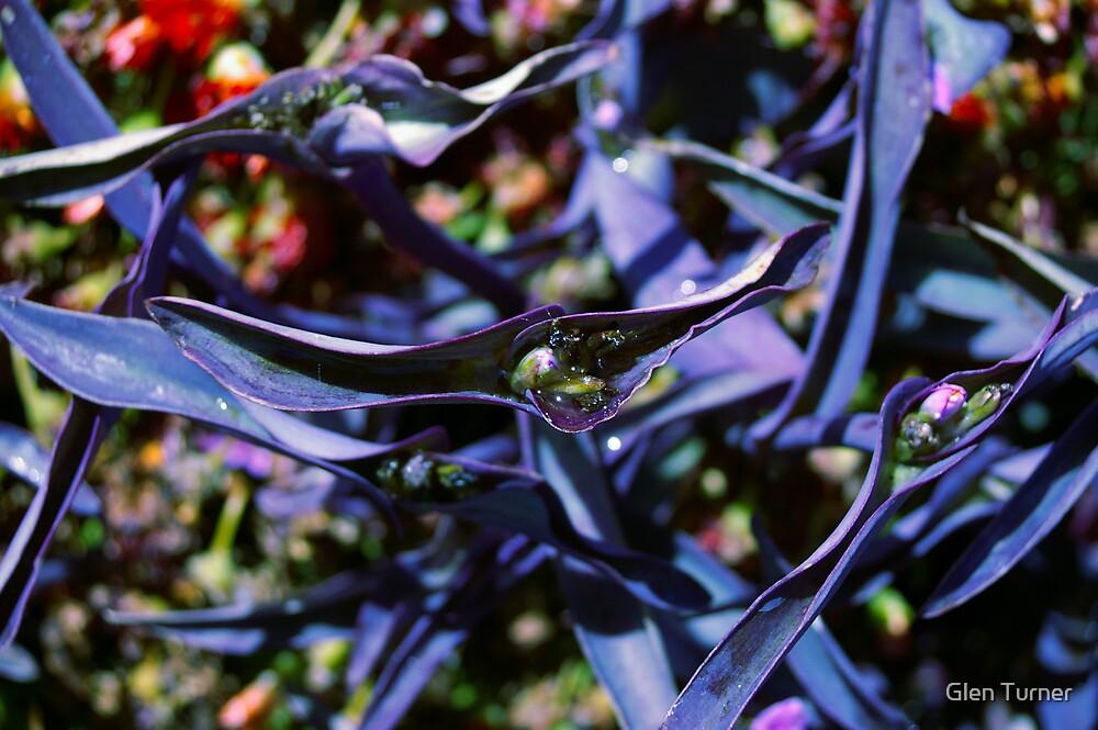 Flowers by Glen Turner