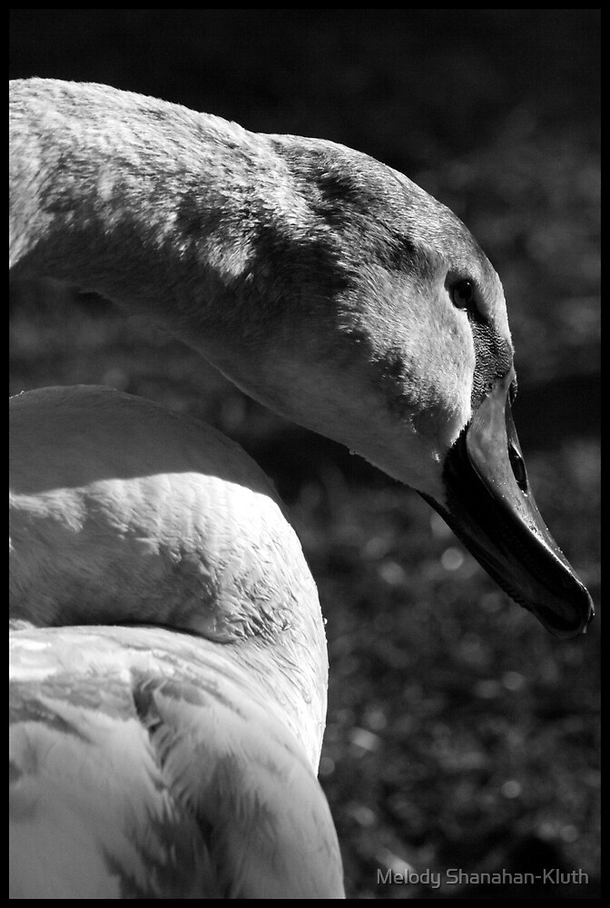 Swan by Melody Shanahan-Kluth