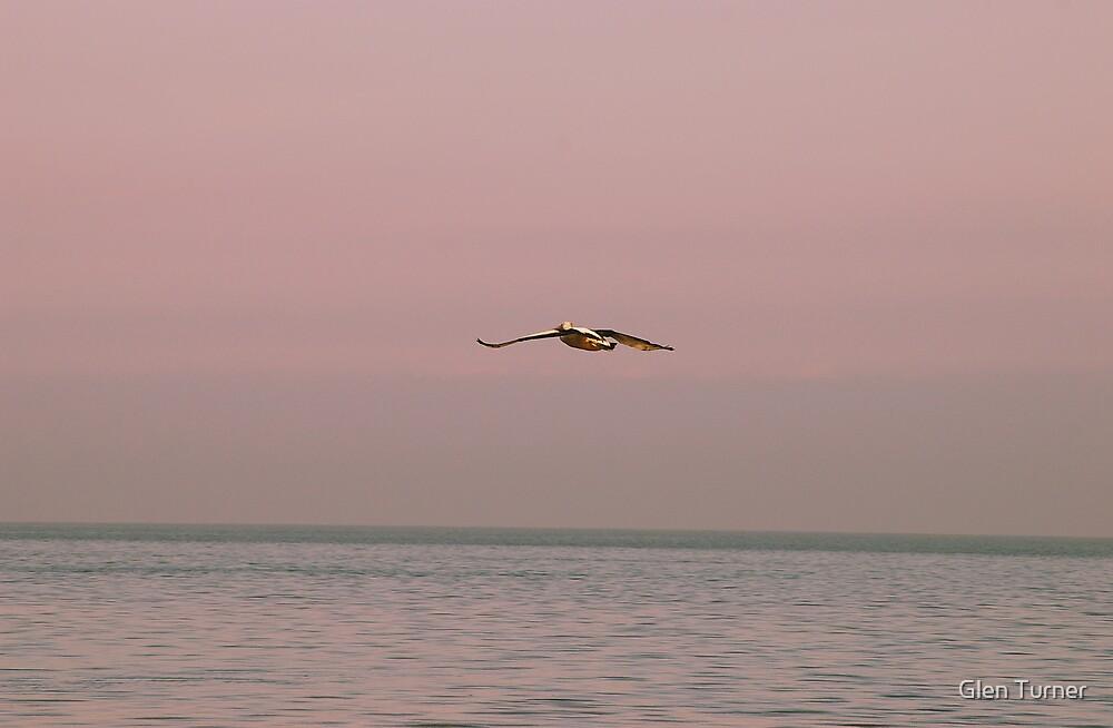 Pelican by Glen Turner