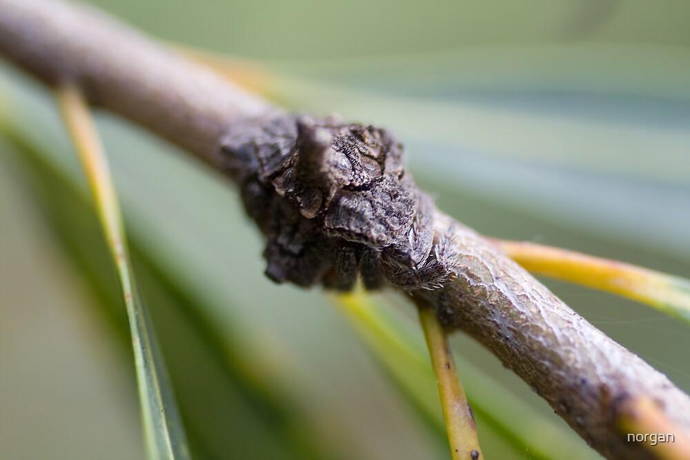 Stick Spider by norgan