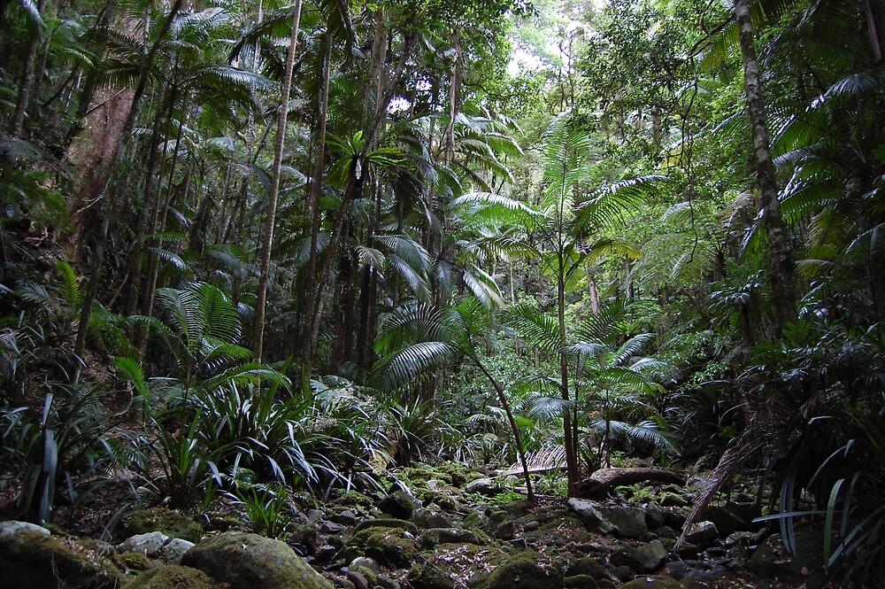 Rainforest by Carly Michael