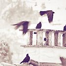 Crows in Winter by Silvia Ganora