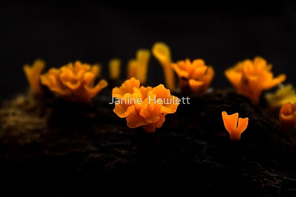 Orange Fungus by Janine  Hewlett