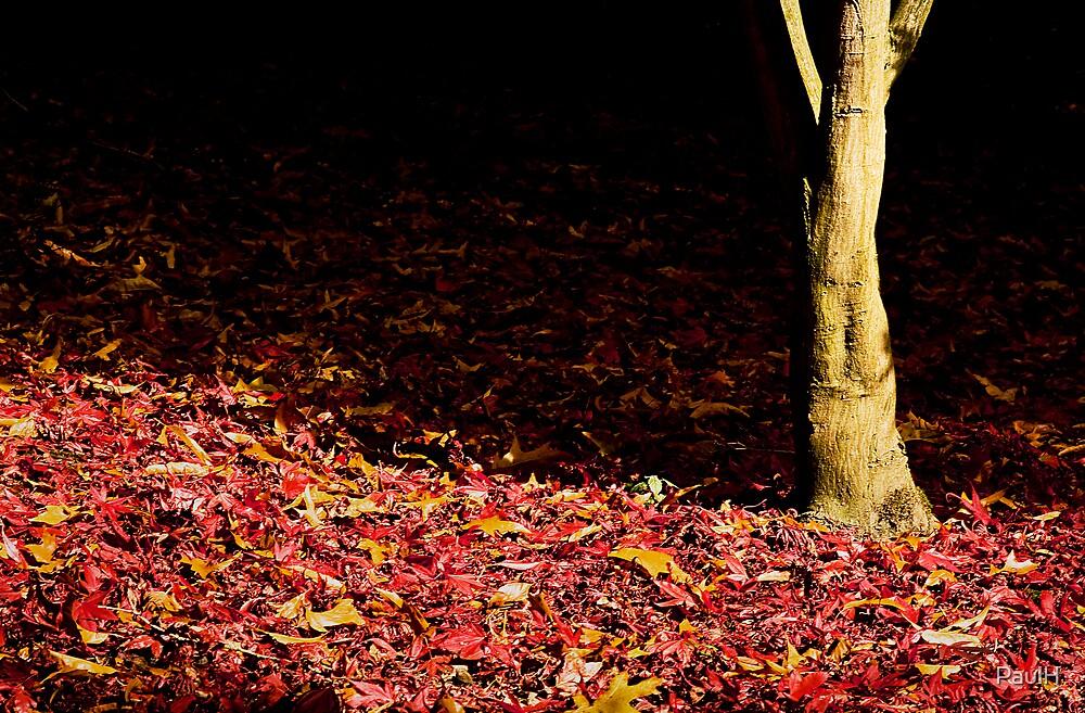 Autumn Trunk by PaulH