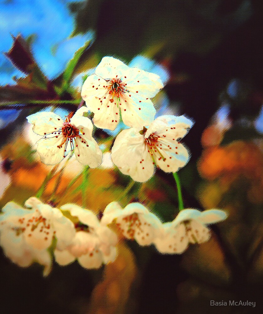 Canvas Blossoms... by Basia McAuley