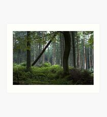 The Dark Forest Print / Irish Dark Forest / Nature / Trees Photo Art Print