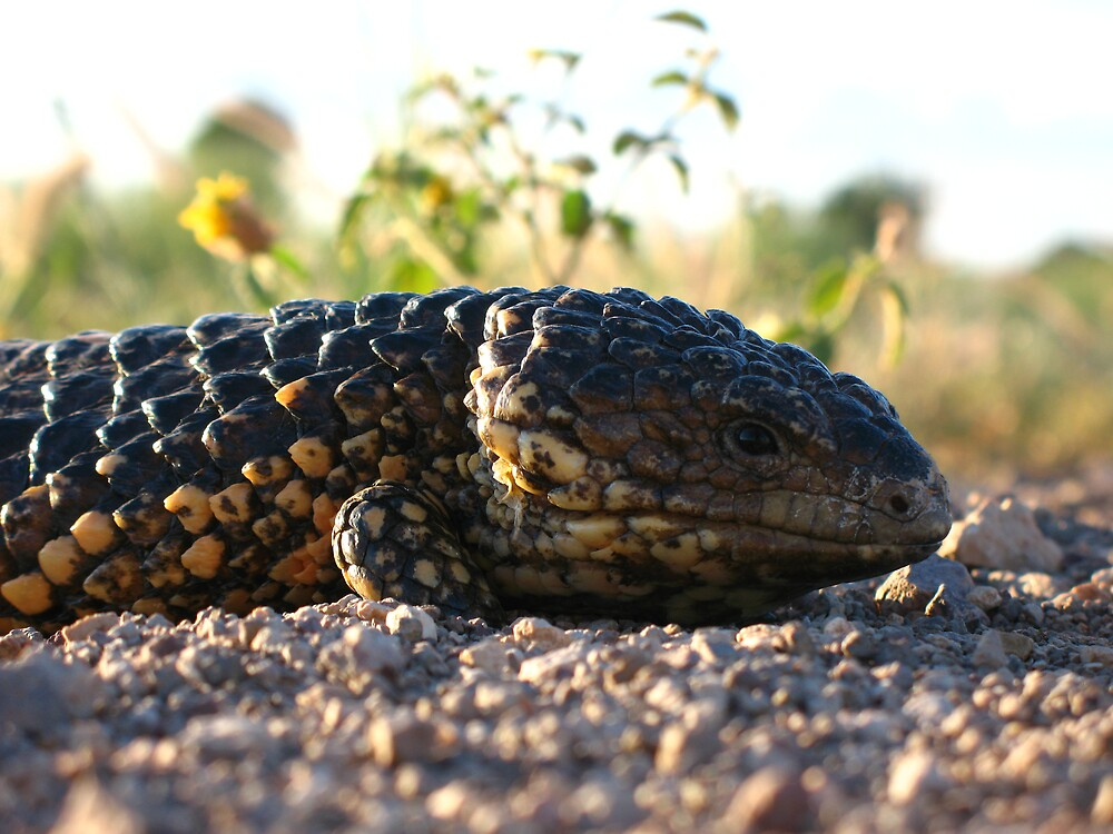 Bog-eye Lizard by Ross James